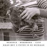 <strong>Allerlei foto's jaren 70</strong><br>01-01-1970 ©Herzele in Beeld<br><br><a href='https://www.herzeleinbeeld.be/Foto/1531/Allerlei-fotos-jaren-70'><u>Meer info over de foto</u></a>