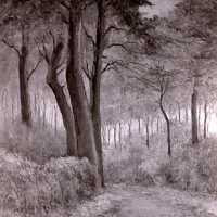 <strong>Kunstschilder Michel Vergucht stelt tentoon  -  1975</strong><br> ©Herzele in Beeld<br><br><a href='https://www.herzeleinbeeld.be/Foto/2146/Kunstschilder-Michel-Vergucht-stelt-tentoon-----1975'><u>Meer info over de foto</u></a>